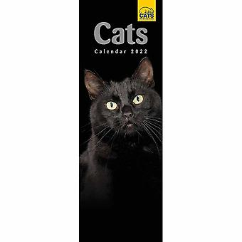 Otter House Cats Protection Slim Kalender 2022