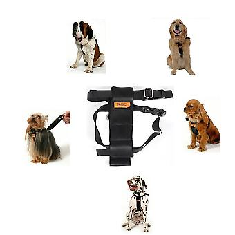 """RAC Standard hund bil sele, 30-41 cm (12-16"""") brystet lille størrelse"""