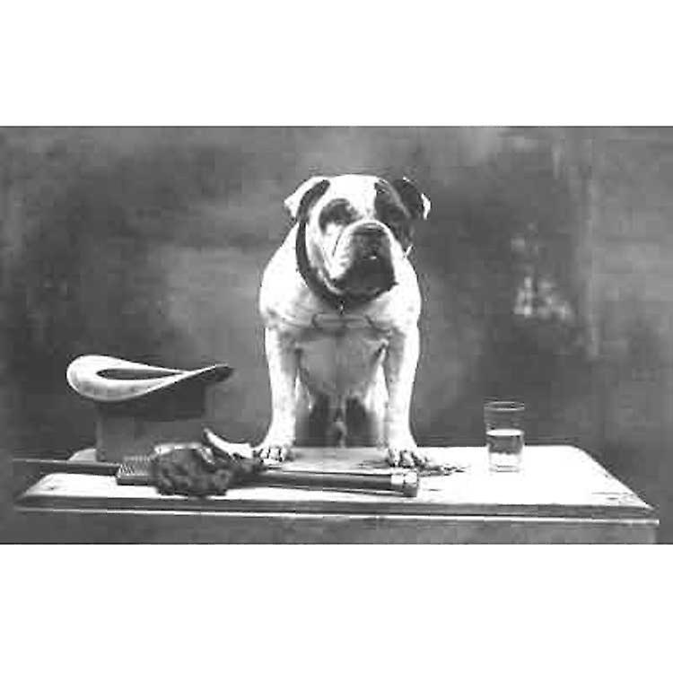 Un des meilleurs Angleterres - Bulldog avec chapeau haut de forme, canne et des gants. Cartes de voeux
