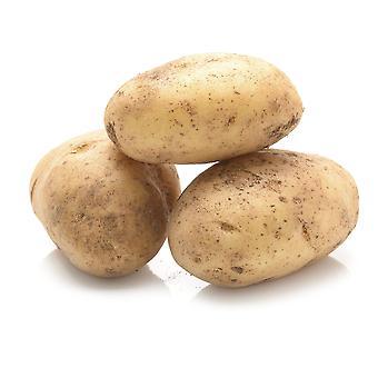 Elveden Fresh British Baking Potatoes 50's