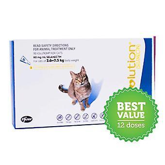 Vallankumous kissoille sininen 12 Pk