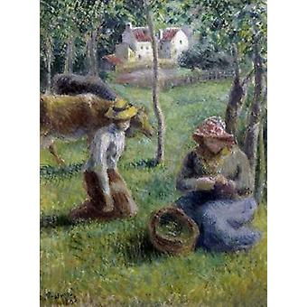Keeper of the Cows Poster Print by  Camille Pissarro