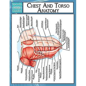 Chest And Torso Anatomy  Speedy Study Guide by Publishing LLC & Speedy