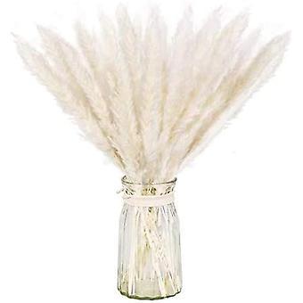 Natural Dried Pampas Grass Set For Home Decor 20pcs (white)