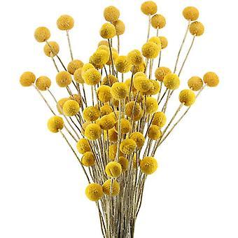 40 גבעולים פרחים מיובשים טבעיים קרפדיה פרחים בילי באטן כדורים פרחוני זר