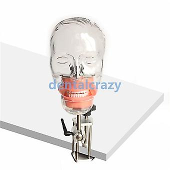 Tandheelkundige Simulator Nissin Manikin Phantom Head Dental Phantom Head Model met Bench Mount Voor Tandarts Onderwijs