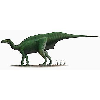 Sticker Sticker Dinosaur Dino Jurassic Deco Child Dollodon Room