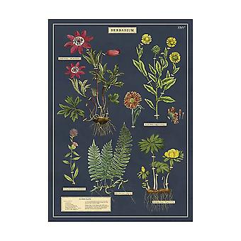 Cavallini Herbarium Wrapping Paper Poster High Quality / Decoupage