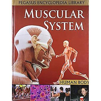 Muscular Systemhuman Body