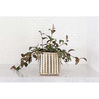 Huulipuna Musta Pagoda Plant + Kori