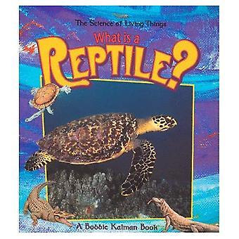 Vad är en reptil?