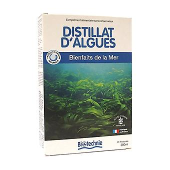 Seaweed distillate 20 ampoules of 10ml