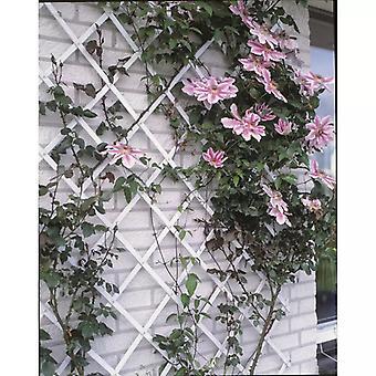 Nature Garden Trellis 100x200 cm PVC Wit 6040703