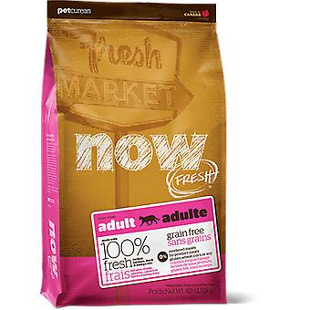 Now Grain Free for adult cats (cats, food, fodder)