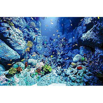 Wallpaper Mural Underwater World (578376