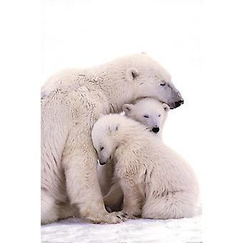 Urso polar família Poster Poster Print