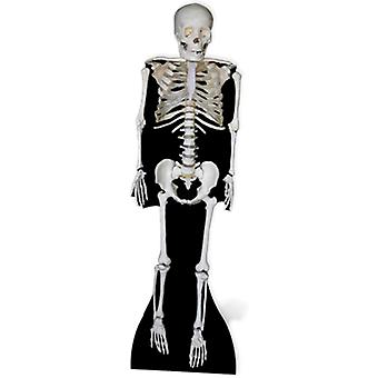 Skeleton Lifesize Cutout