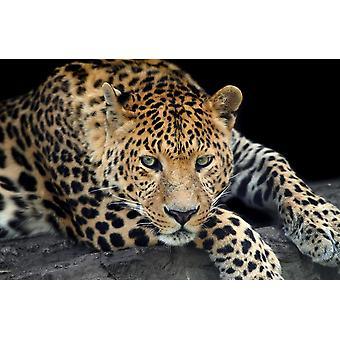 Mural mural Salvaje Leopard