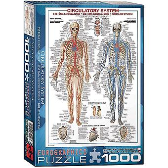 Jigsaw puzzles circulatory system puzzle 1000 pieces