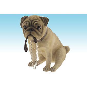 Sentado walkie-talkies do cão de Pug pequeno estuda coleção Leonardo