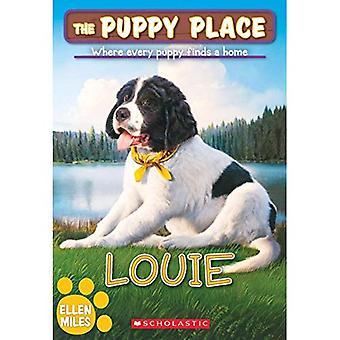 Louie (Welpe Platz)