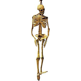 Latex skelett