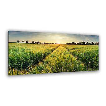 Tableau paysage champ de blés verts au coucher du soleil - 80x30 cm