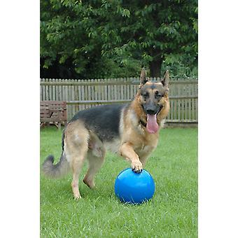 "Company of Animals Boomer Ball, Dog Toy 8"" (20CM)"