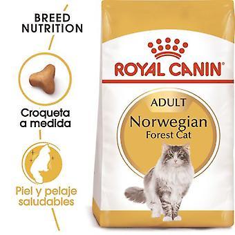Royal Canin  Norweigan Forest Pienso para Gato Adulto Bosque de Noruega