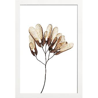 JUNIQE Print - Helicopter Leaves - Bladeren & Planten Poster in Crème Wit & Wit