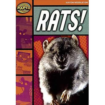 Rats (Rapid)