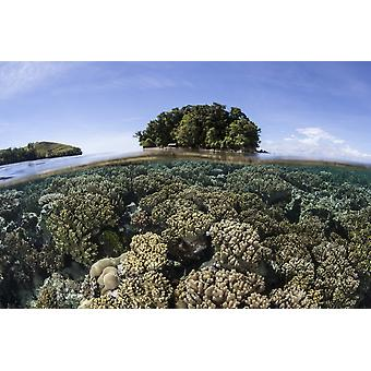 A healthy coral reef grows in the Solomon Islands Melanesia This region in the eastern part of the Coral Triangle harbors spectacular marine biodiversity and is known for its beautiful reefs Poster Pr