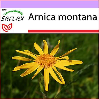 Saflax - 40 Samen - Arnika - Arnica des Montagnes - Arnika - Árnica - Backmischung Arnika