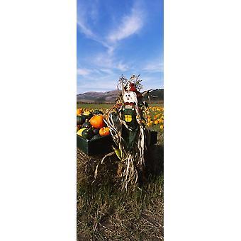 Scarecrow in Pumpkin Patch Half Moon Bay California USA Poster Print