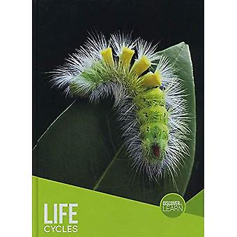 Life Cycles (Discover & Learn)