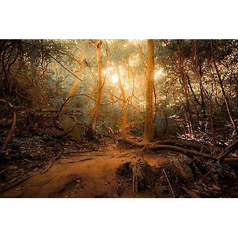 Muurschildering Fantasy Forest