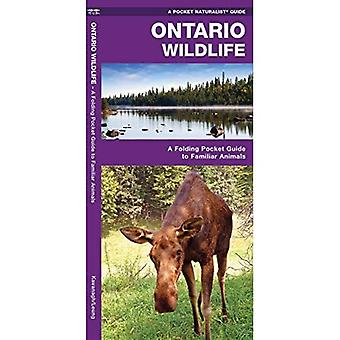 Ontario Wildlife: An Introduction to Familiar Species