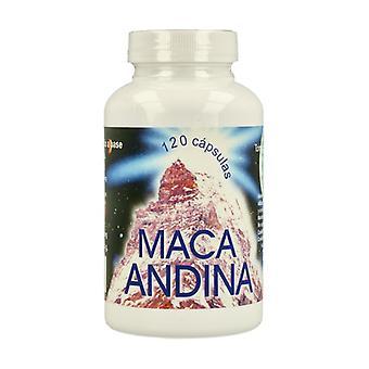 Andean Maca 120 capsules of 720mg