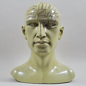 Phrenology Head Sculpture H20cm