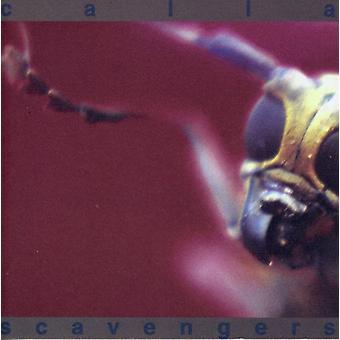 Calla - Scavengers [CD] USA import