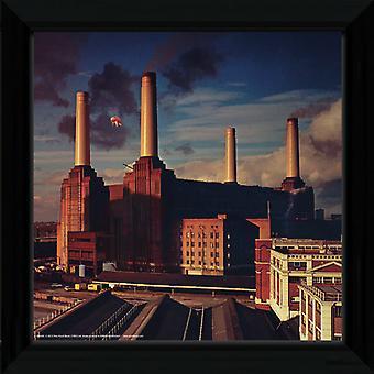 Pink Floyd-Animals gerahmt Album decken Print 12x12in