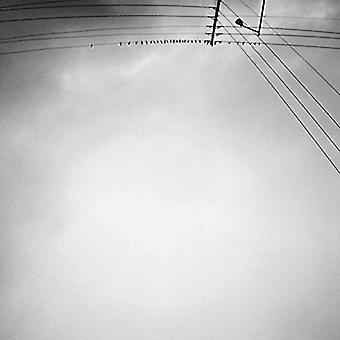 Armand Margjeka - Hummingbird [Vinyl] USA import