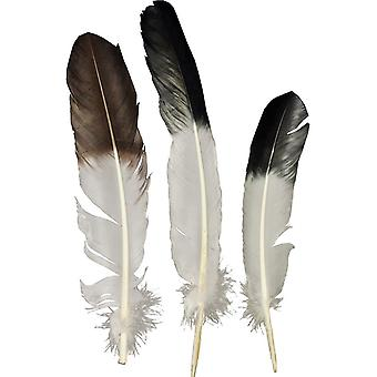 Eagle Tip Feather