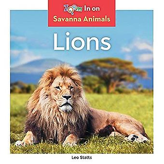 Lions (animaux de la savane)