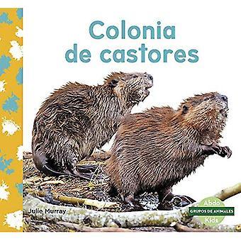 Colonia de castores (Bever kolonie)