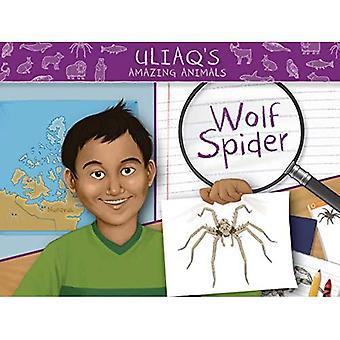 Uliaq's Amazing Animals: Wolf Spider (Engels) (Nunavummi)