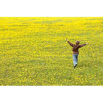 Young Boy Running Through Field Of Dandelions With Hands Up In The Air Fernie British Columbia PosterPrint