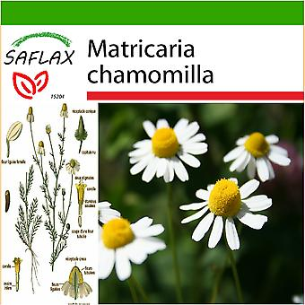 Saflax - 300 frø - med jord - Mayweed - Camomille - Camomilla - sauvage Manzanilla común - Echte Kamille