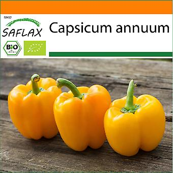 Saflax - Tuin in de Zak - 20 zaden - Biologisch - Sweet Pepper - Golden California Wonder - BIO - Poivron - Californië wonder - Jaune - BIO - Peperone - Golden California Wonder - Ecológico - Pimiento - Maravilla dorada de California - BIO - Paprika - Golden California Wonder