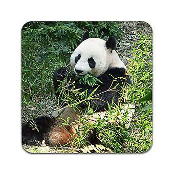 2 ST Panda Coasters